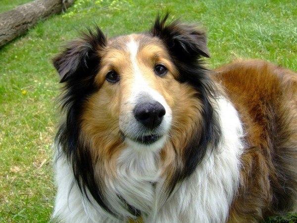 21-remedios-caseros-y-naturales-para-mascotas-vitamina-e-para-el-cachorro