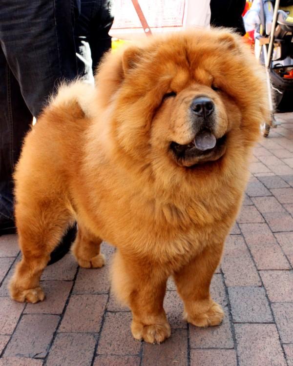 Remedio para la caída del pelo del perro