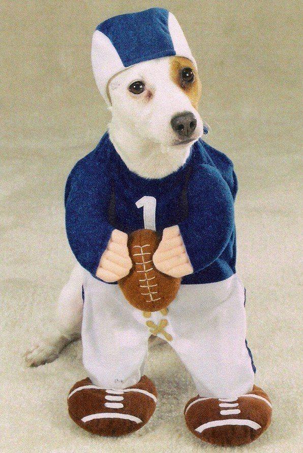 disfraces-para-perros-carnaval-2016-disfraz-de-jugador