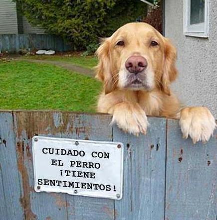 fotos-originales-cuidado-con-el-perro-perro-con-sentimientos