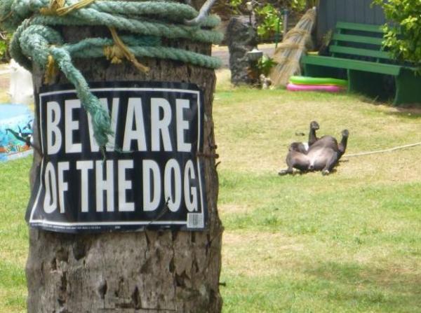 fotos-originales-cuidado-con-el-perro-perro-tumbado-boca-arriba