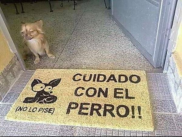 fotos-originales-de-cuidado-con-el-perro-Cuidado-con-el-perro-no-lo-pise