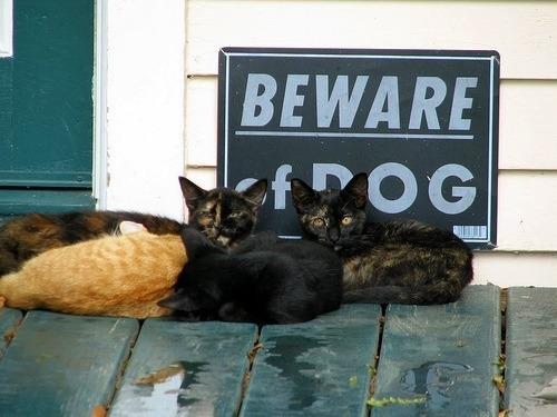 fotos-originales-de-cuidado-con-el-perro-cartel-gatos