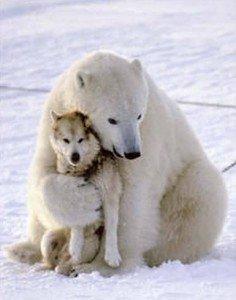 husky_oso_polar