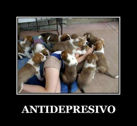 perros antidepresivos