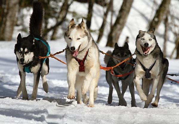 Como entrenar a un perro en cinco pasos