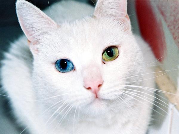 Nombres de gatos | Hembras