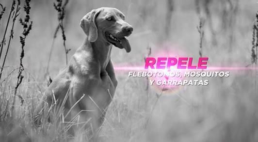 antiparasitario-perros-frontline