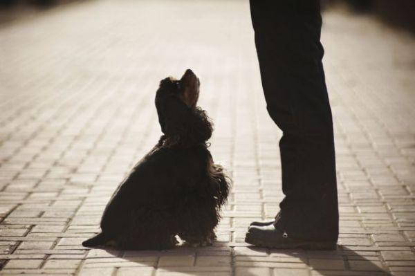 entrenar a un perro