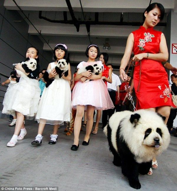 perros pandas