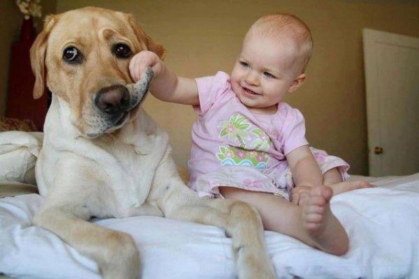 alergia canina
