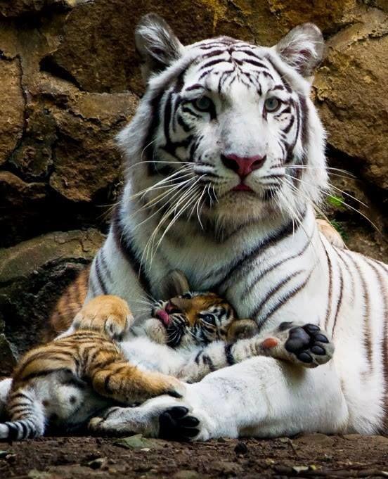 animales madres e hijos