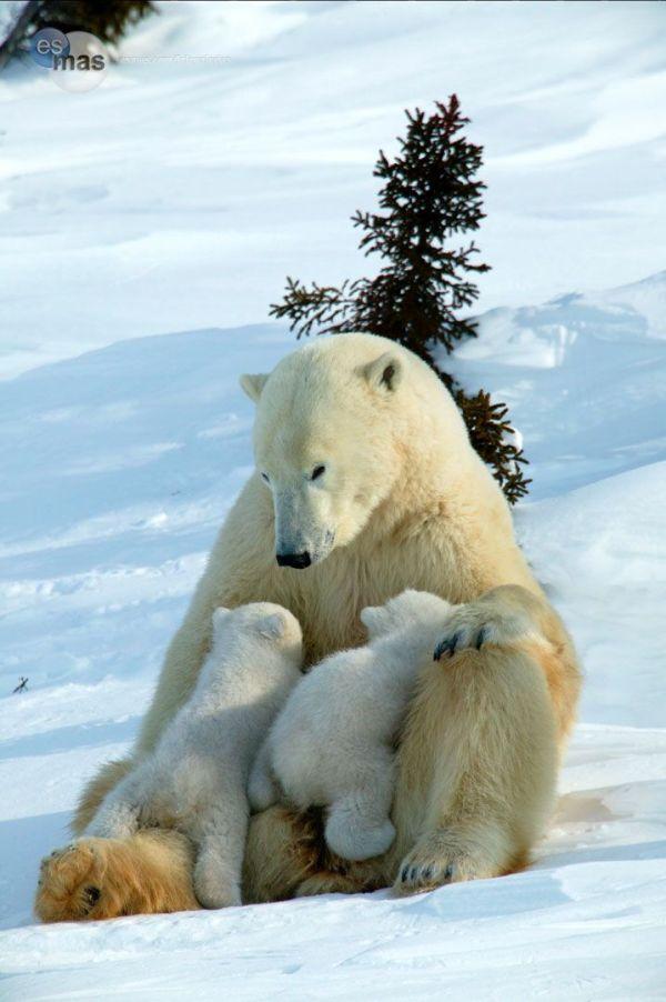 madres e hijos animales