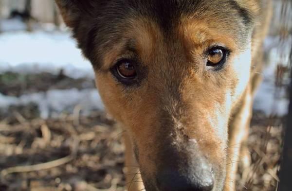 10-alimentos-peligrosos-en-una-barbacoa-para-animales-domesticos-perros-y-gatos