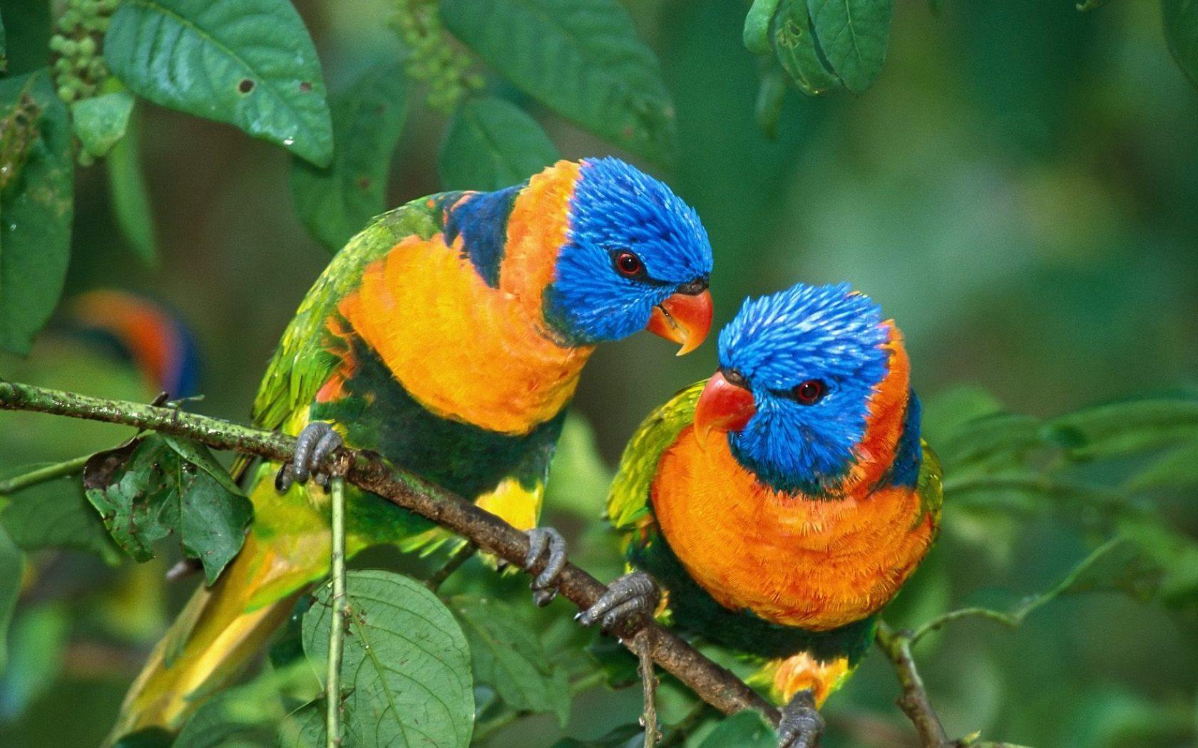 Pájaros Tropicales del paraiso