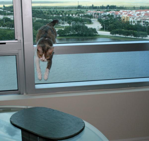 como-evitar-sindrome-de-gran-altura-en-gatos