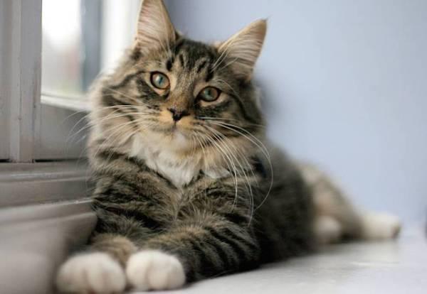como-evitar-sindrome-de-gran-altura-en-los-gatos
