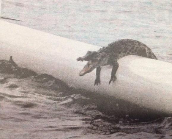 cual-es-el-pais-que-tiene-los-animales-mas-peligrosos-del-planeta-cocodrilo-en-un-recinto-de-natacion
