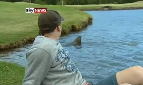 cual-es-el-pais-que-tiene-los-animales-mas-peligrosos-del-planeta-tiburon-en-un-campo-de-golf