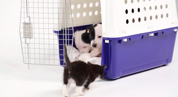 mira-lo-que-pasa-cuando-se-encuentran-cachorros-de-gatos-y-perros