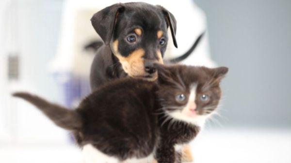 mira-que-pasa-cuando-se-encuentran-cachorros-de-gatos-y-perros-por-primera-vez
