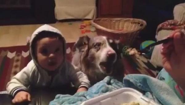 perro-aprende-a-decir-mama-antes-que-bebe