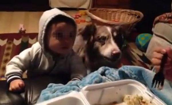 perro-aprende-a-decir-mama-antes-que-bebe.-video-viral