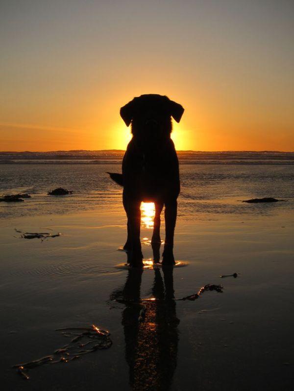 playas para ir con perros