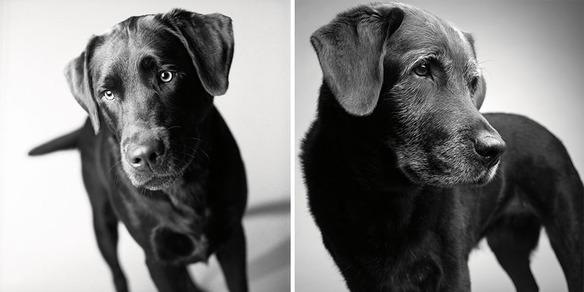 perro-joven-perro-adulto-corbet