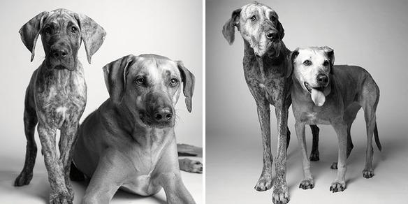 perro-joven-perro-adulto-kayden-brodie