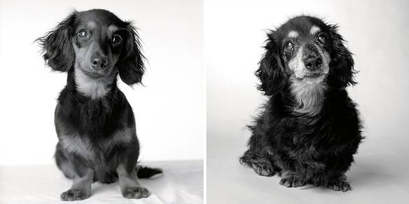 perro-joven-perro-adulto-lily