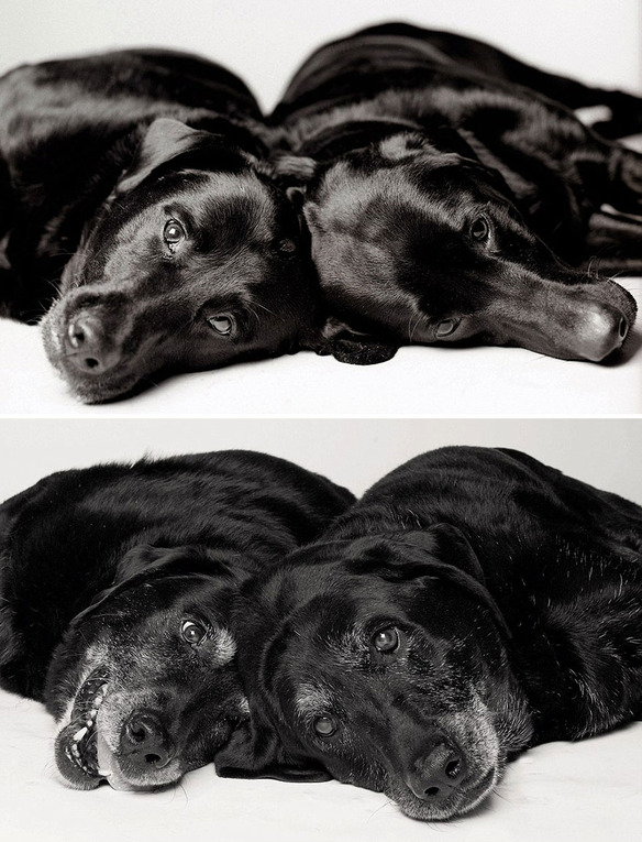 perro-joven-perro-adulto-maddie-ellie