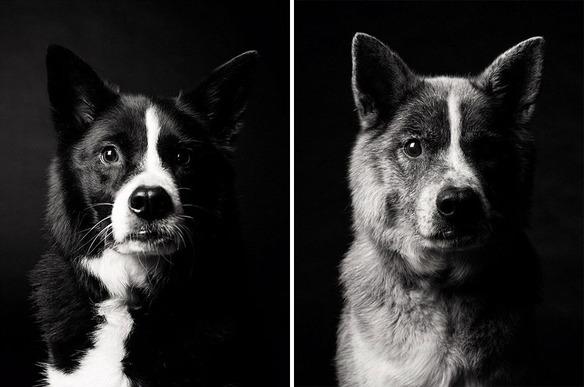 perro-joven-perro-adulto-maddy