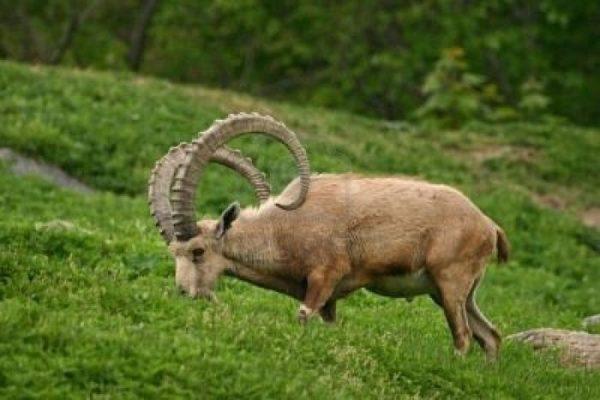 animales-omnivoros-herbivoros