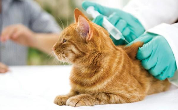 calendario-vacunacion-de-los-perros-cuidados-gatos