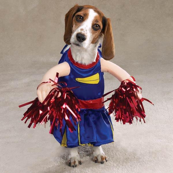 50 Disfraces caseros para mascotas   Halloween 2015