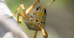 Invertebrados: Poríferos, Celentéreos, Anélidos, Moluscos, Equinodermos y Artrópodos