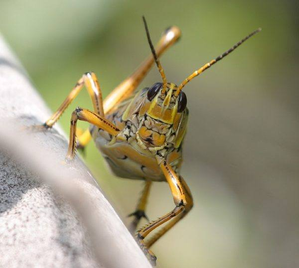 Invertebrados: Poríferos, Celentéreos, Anélidos, Moluscos ...