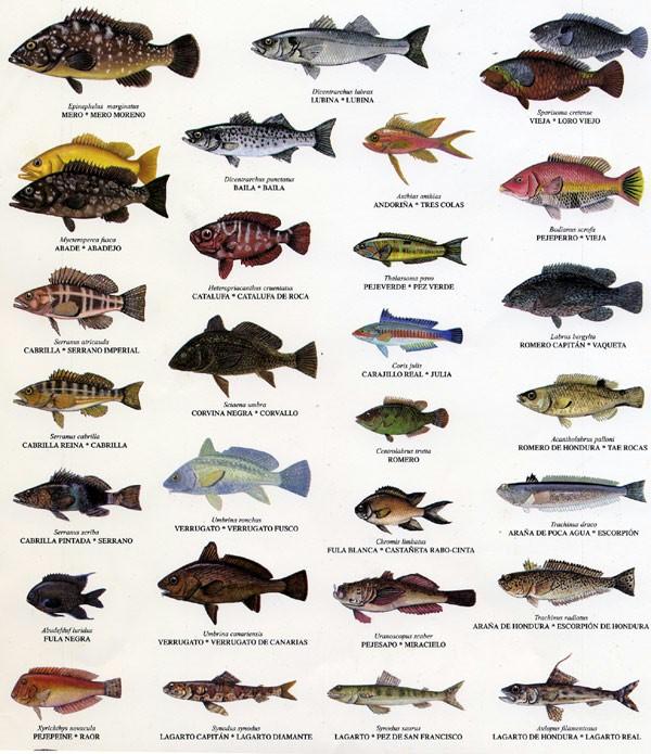 Animales vertebrados animalesmascotas for Como se cultivan los peces