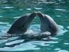 Amor y ternura bajo el agua