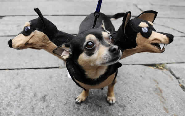 50 Disfraces caseros para mascotas | Halloween 2015