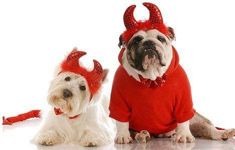 Resultado de imagen para mascotas halloween