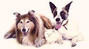 infecciones-urinarias-perros-causas-edad-en-la-que-pasa