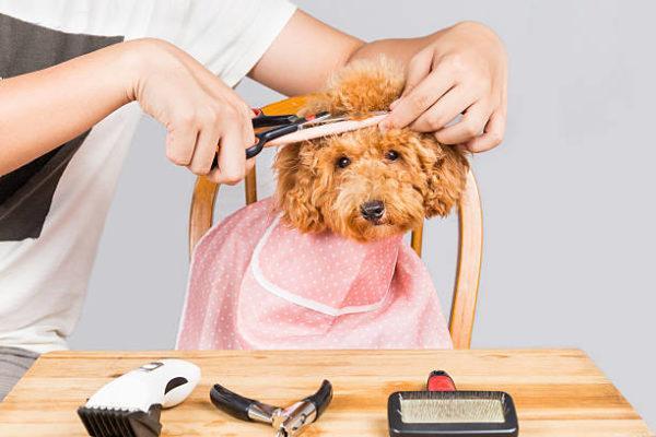 Como cortar el pelo del perro que se necesita