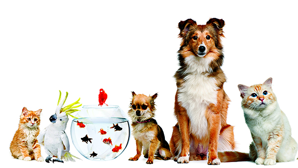 como-elegir-nombres-curiosos-y-extraños-para-animales
