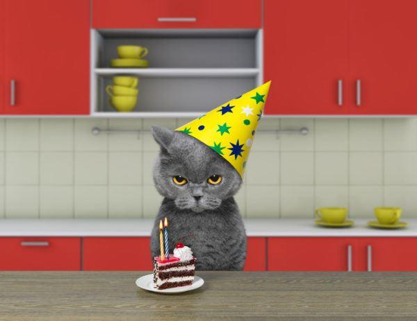 Fotos de gatos graciosos gato enfadado de cumpleanos