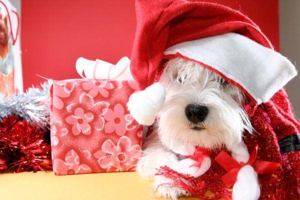 juegos-de-navidad-para-mascotas