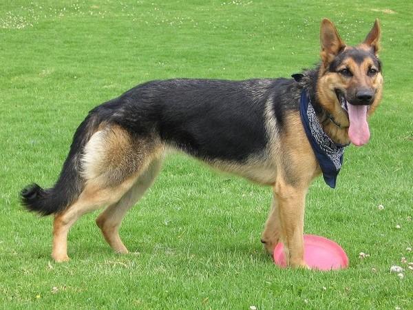 nombres-perros-machos