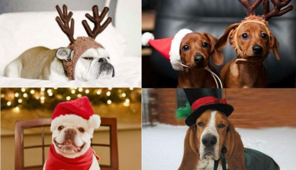 como-hacer-disfraces-de-navidad-para-perros-y-gatos