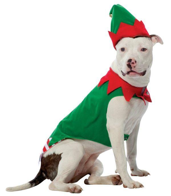 como-hacer-disfraces-de-navidad-para-perros-y-gatos-elfo
